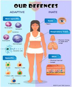 Immunity System